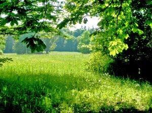 image_Sobre_a_importancia_da_biodiversidade